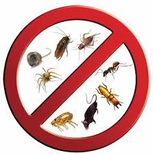 شركة مكافحة الحشرات بحوطة بني تميم