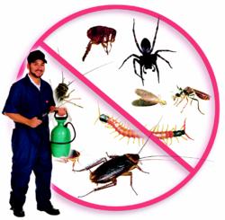 مكافحة حشرات بتميم