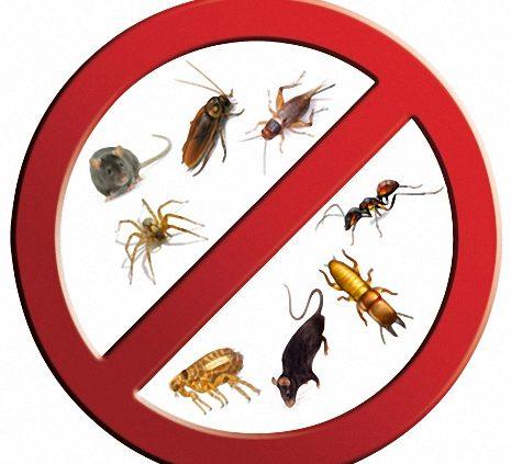 شركة مكافحة حشرات المزاحمية