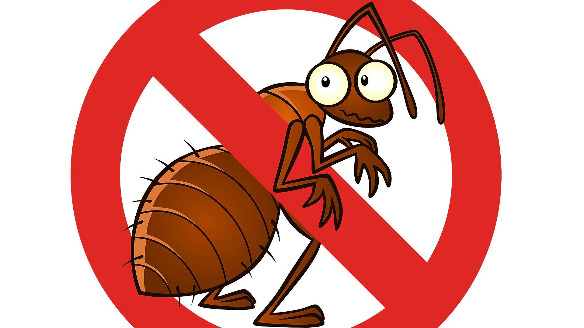شركة مكافحة النمل الأبيض بالخرجl