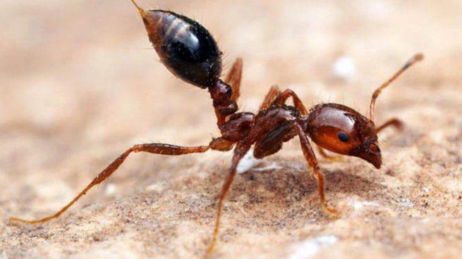 شركة مكافحة نمل الأسود