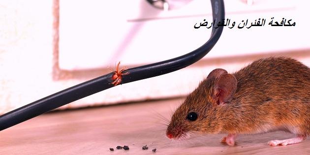 مكافحة الفئران والقوراض بالرياض
